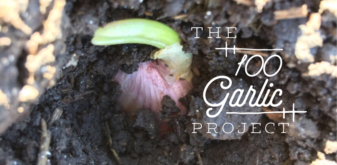 The 100 Garlic Project